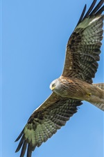 Preview iPhone wallpaper Eagle flying, wings, blue sky