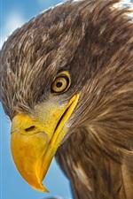 Preview iPhone wallpaper Eagle head close-up, beak, eye
