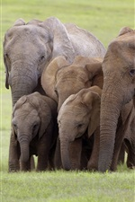 Preview iPhone wallpaper Elephants family, South Africa, grass