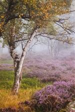 미리보기 iPhone 배경 화면 영국, 헤더, 더비셔, 자작 나무 숲, 야생화, 안개, 가을