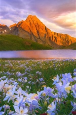 Preview iPhone wallpaper Flowers, lake, mountains, clouds, sun