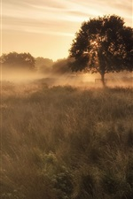 Preview iPhone wallpaper Fog, grass, trees, morning