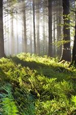 Preview iPhone wallpaper Forest, grass, trees, green, sunlight