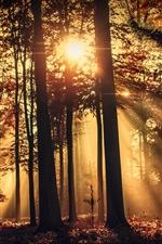 Preview iPhone wallpaper Forest, morning, sun rays, trees