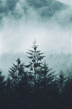 Preview iPhone wallpaper Forest, mountains, fog, morning, nature landscape