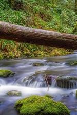 Forest, stream, moss, stones, Canada