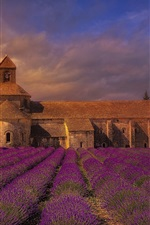 France, monastery, lavender flowers field