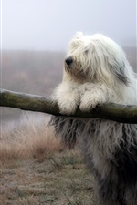 Preview iPhone wallpaper Furry white dog, fence, grass, nature