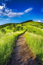 Germany, plantation, vineyard, grass, path