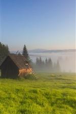 미리보기 iPhone 배경 화면 잔디, 안개, 나무, 헛, 아침