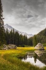 Grass, lake, trees, rocks, mountains