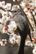 Gray bird, flowers tree