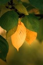 미리보기 iPhone 배경 화면 녹색과 노란색 단풍, 나뭇 가지, 가을