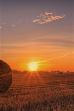 Preview iPhone wallpaper Hay, field, sunset