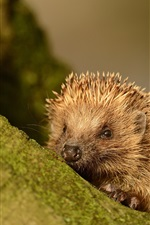 Preview iPhone wallpaper Hedgehog close-up, tree