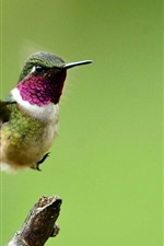 Preview iPhone wallpaper Hummingbird, flight, wings, green background