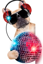 Preview iPhone wallpaper Humor, funny dog, headphones, glasses, colorful ball