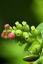 Insect, plant, green, blurry