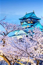Preview iPhone wallpaper Japan, Osaka, temple, flowering, sakura, night