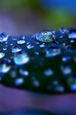 Leaf, water drops, macro photography
