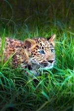Preview iPhone wallpaper Leopard cub, green grass
