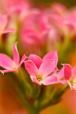Preview iPhone wallpaper Little pink flowers close-up, bokeh