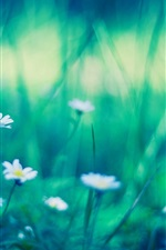 Preview iPhone wallpaper Little white flowers, green, blurry background