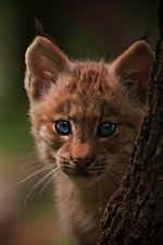 Preview iPhone wallpaper Lynx cub, tree, bokeh