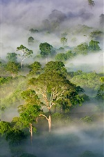 Preview iPhone wallpaper Malaysia, Sabah, beautiful nature landscape, forest, trees, fog