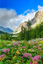 Mountain, trees, flowers, valley