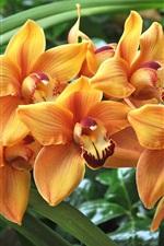 Orange orchids, green leaves