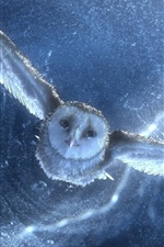 Owl flying, water drops