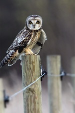Owl standing on fence