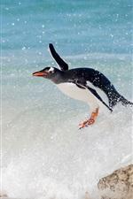 Pinguim, surfar, mar, ondas
