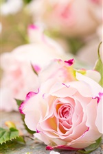 Preview iPhone wallpaper Pink flowers, roses, petals, blurry background