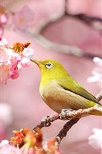 Preview iPhone wallpaper Pink flowers, sakura, bird
