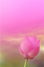Preview iPhone wallpaper Pink lotus flower, blurry background
