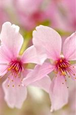 Preview iPhone wallpaper Pink petals flowers close-up, bokeh, spring