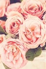 미리보기 iPhone 배경 화면 핑크 장미, 꽃, bokeh