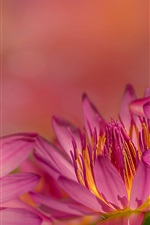 Pink water lily flowers macro photography