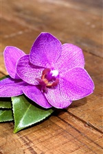 Preview iPhone wallpaper Purple orchid flowers, wood board