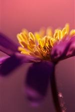 Preview iPhone wallpaper Purple petals flower macro photography, pistil
