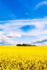 Preview iPhone wallpaper Rapeseed flowers field, beautiful scenery