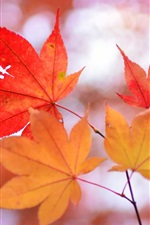 Preview iPhone wallpaper Red maple leaves, twigs, blurry background