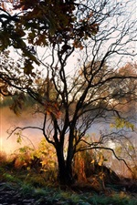 Preview iPhone wallpaper River, trees, fog, morning, autumn