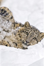 Preview iPhone wallpaper Snow leopard, play snow, winter