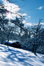 Preview iPhone wallpaper Snow, trees, house, sun, winter