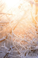 Snow, twigs, forest, glare, winter