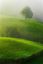 Primavera, verdes, colinas, árvores, cerca