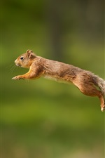 Preview iPhone wallpaper Squirrel jump